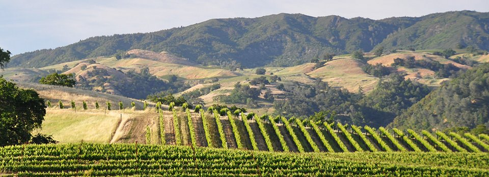 Bicycling California's Sonoma Wine Coast (TourzPlus™)