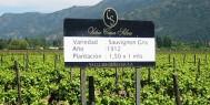 chile-wine.banner