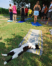Freccia the ExperiencePlus! farm cat shows off her yoga moves.