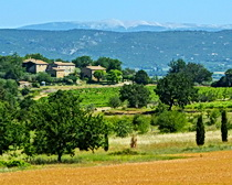 Mont Ventoux in the distance - cycling in Provence with ExperiencePlus Bicycle Tours