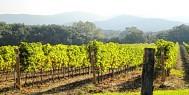 banner_vineyards