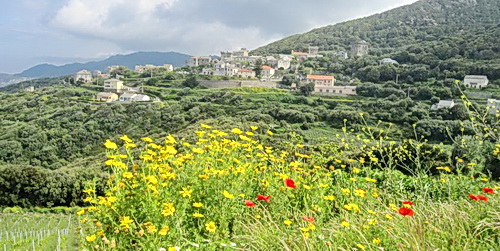 banner_corsica
