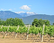 Vineyards and mountains of Corsica. Photo by ExperiencePlus! traveler Nancy Andreae