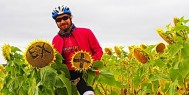 ExperiencePlus! sunflowers along the Camino. Photo by Gigi Ragland