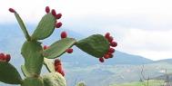 Riserva dello Zingaro Sicily
