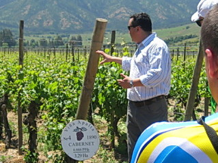 Chile's Wine Country with ExperiencePlus! Bicycle Tours